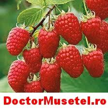 Ceai-de-zmeur--frunze--50g-vrac-www-farmacie-naturista-ro.jpg